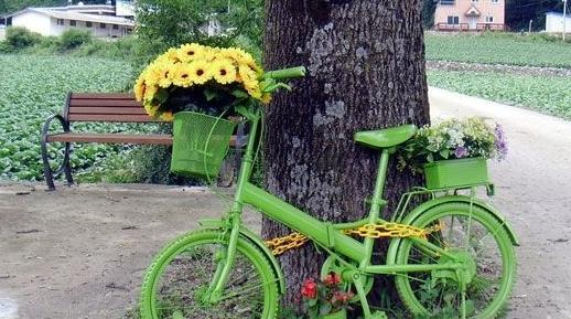 自行车的车筐做花盆图片